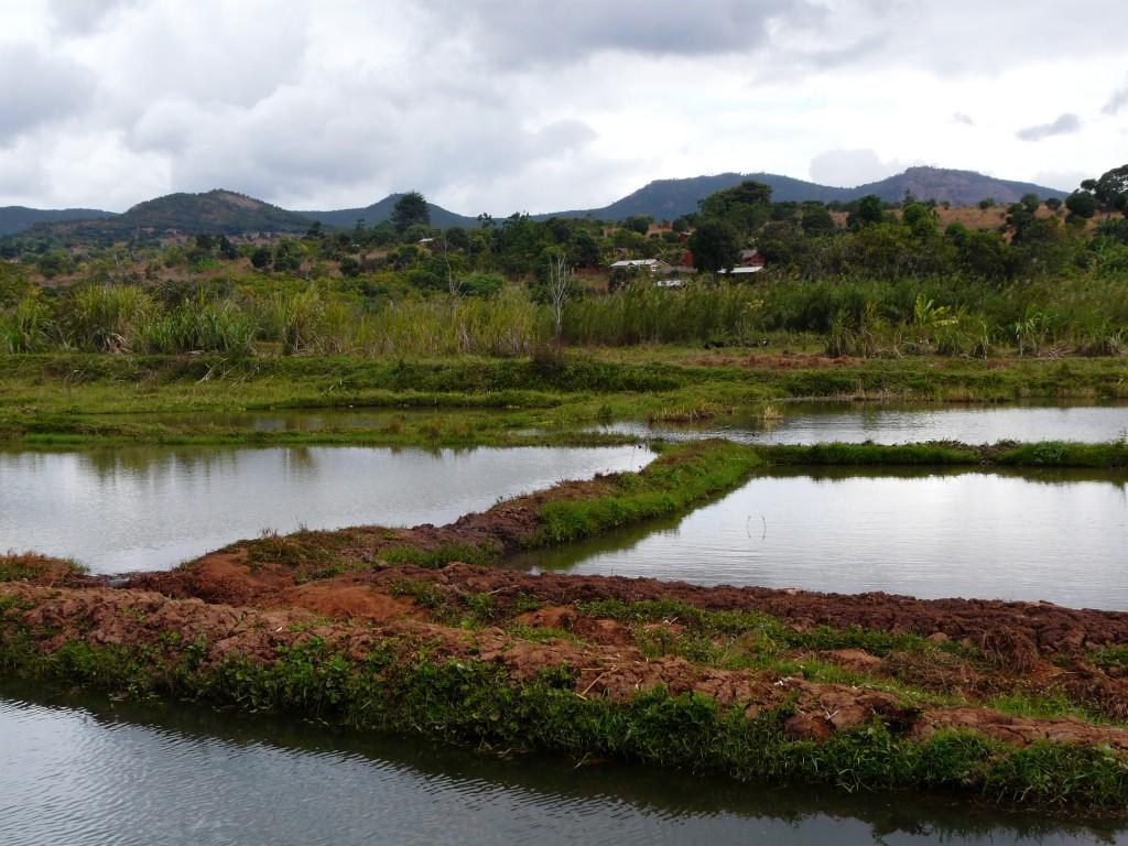 Ponds_in_Songea,_Tanzania