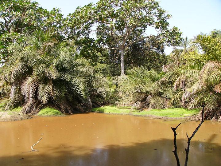 Abuko Nature, Gambia