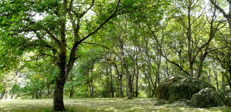Arslanbob walnut forest, Kyrgyzstan