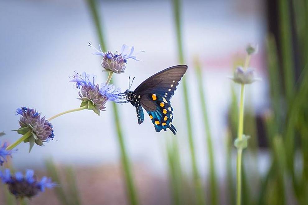 Butterfly-Wonderland