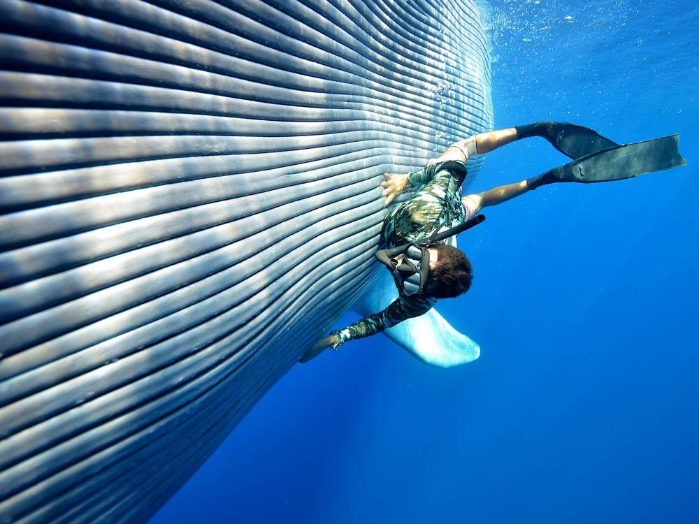 Dive Tonga