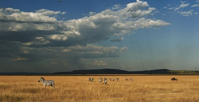 Grumeti Reserves