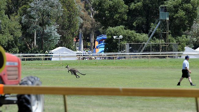 Hanging Rock Picnic Races