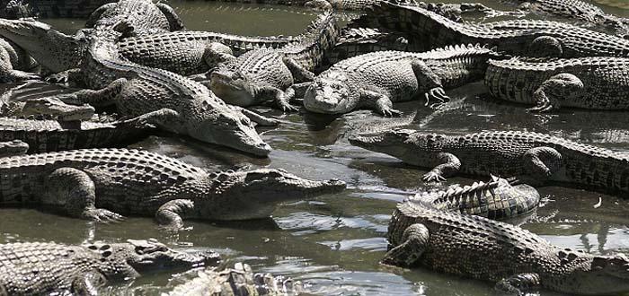 Moitaka Crocodile Farm, Papua New Guinea