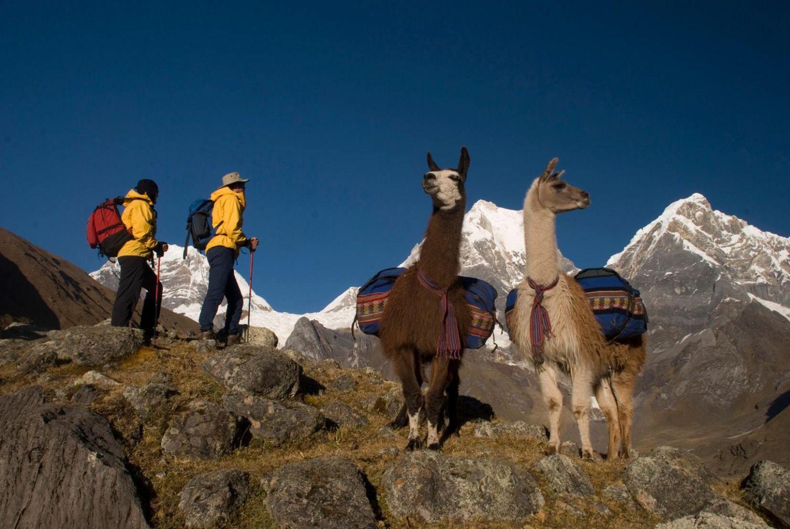 Olleros-Chavin Llama Trek, Peru