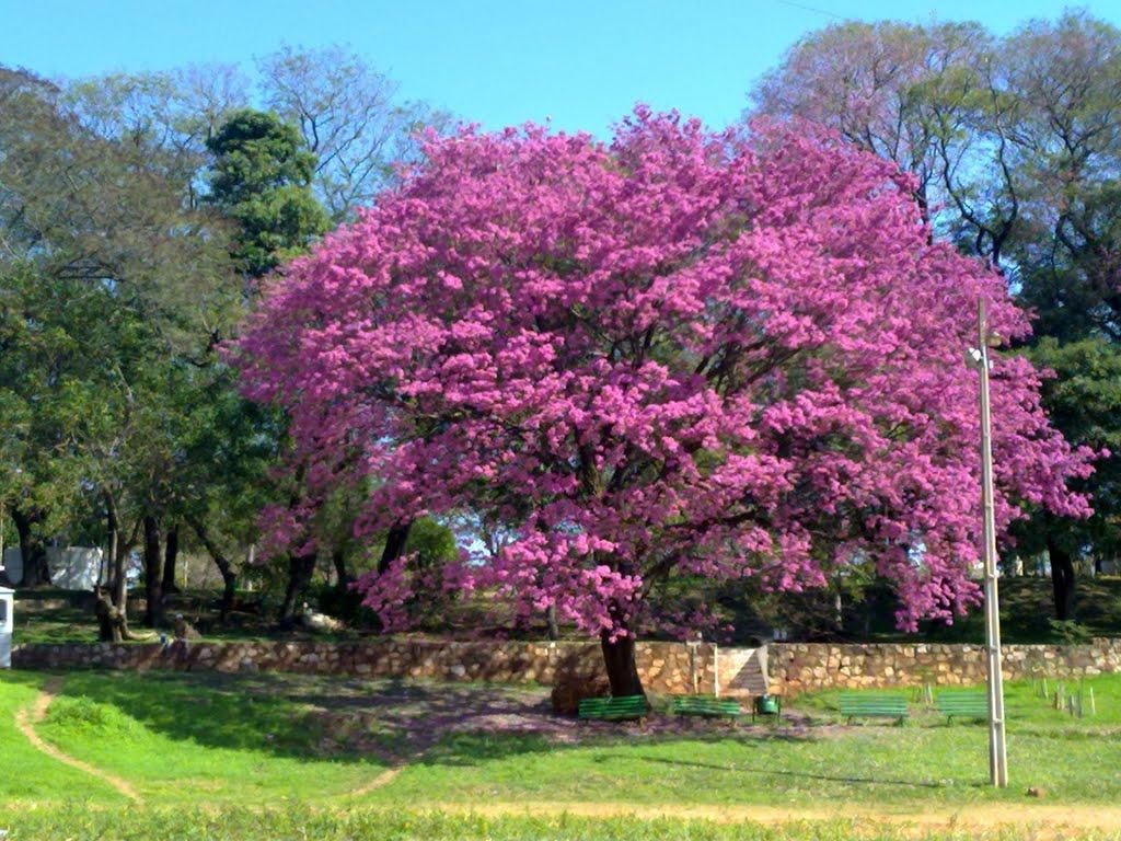 Parque Carlos Antonio Lopez, Paraguay