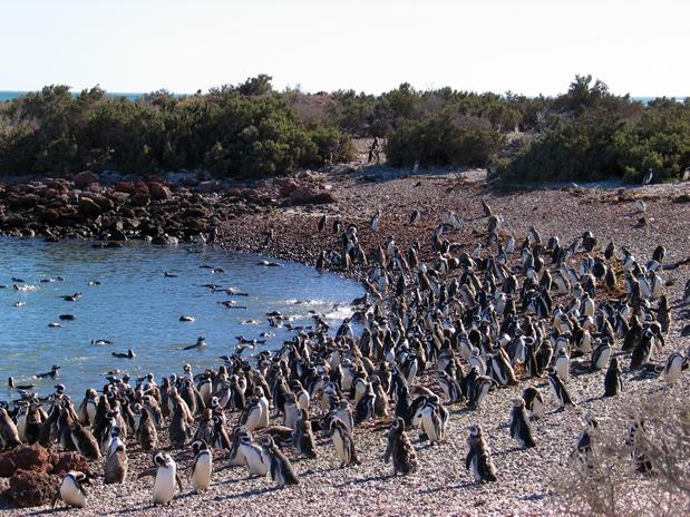Punta Tombo Puerto Madryn, Argentina