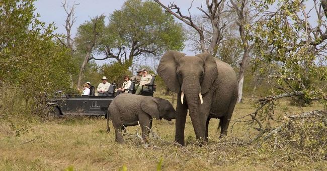 Sabi Sand Reserve Ultimate Safari