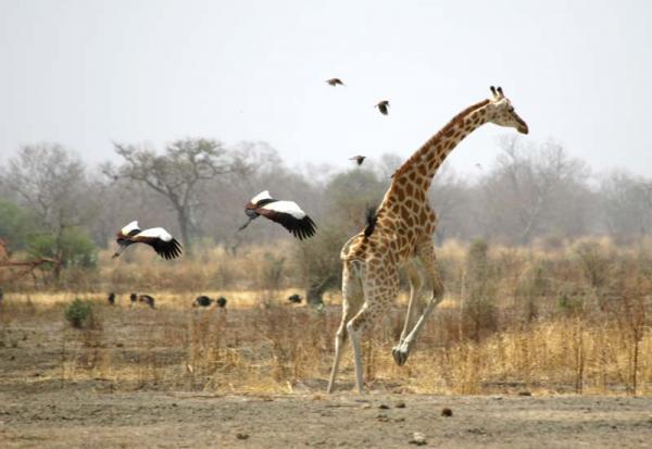 Waza National Park, Cameroon