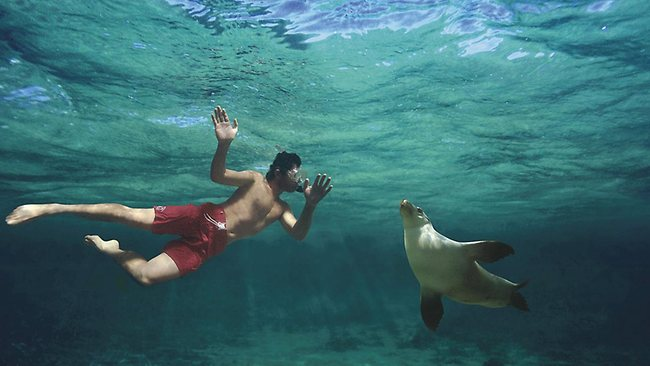 ballooning, abseiling, swimming with dolphins in Australia
