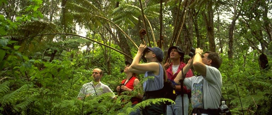 bird watching, Niue