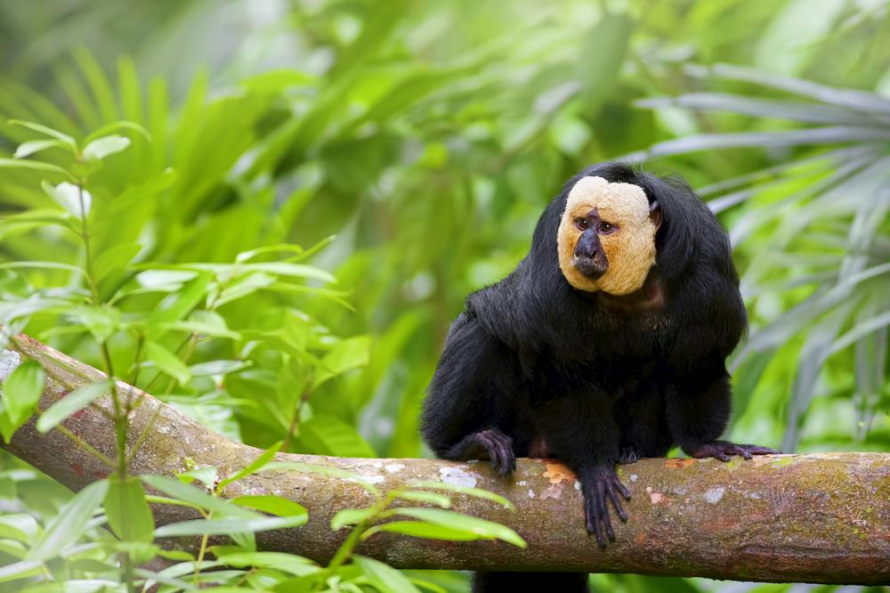 jungles, Suriname