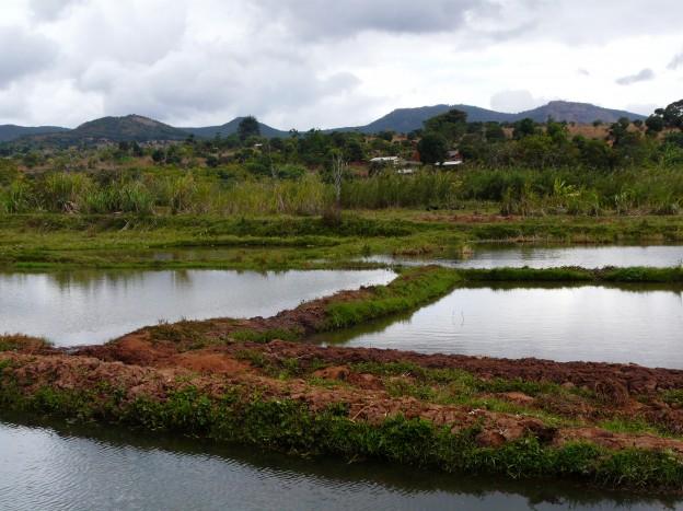 Ponds in Songea Tanzania
