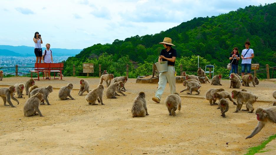 Arashiyama-Monkey-Park kyoto