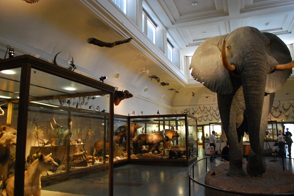 Gothenburg Natural History Museum