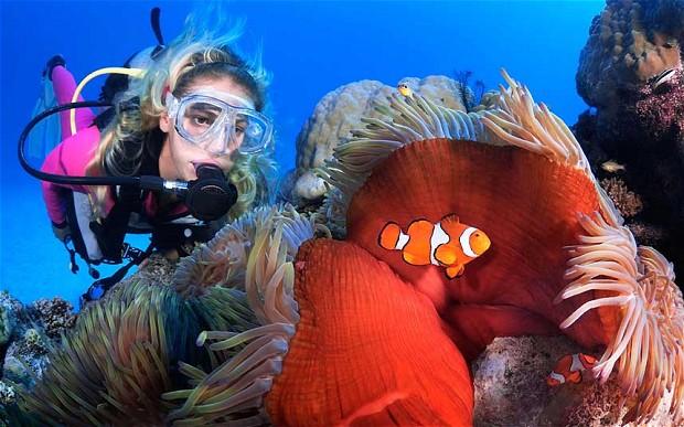 Great Barrier Reef, Australia4