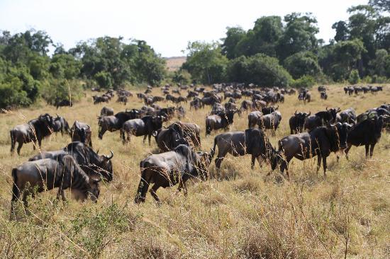 Mara Naboisho Conservancy Masai Mara Reserve