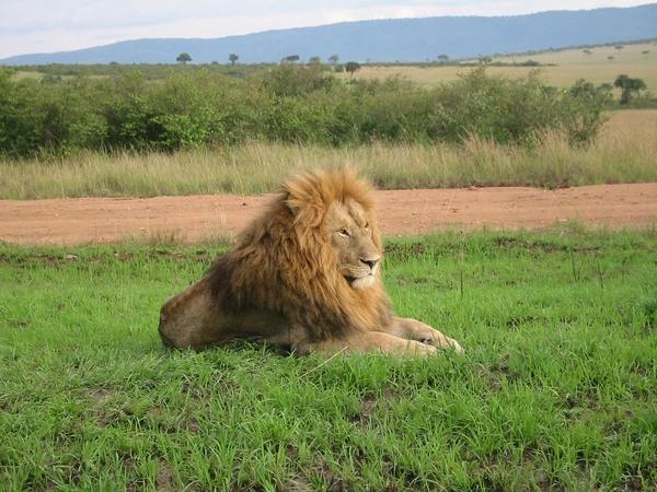 Masai Mara Reserve Pictures