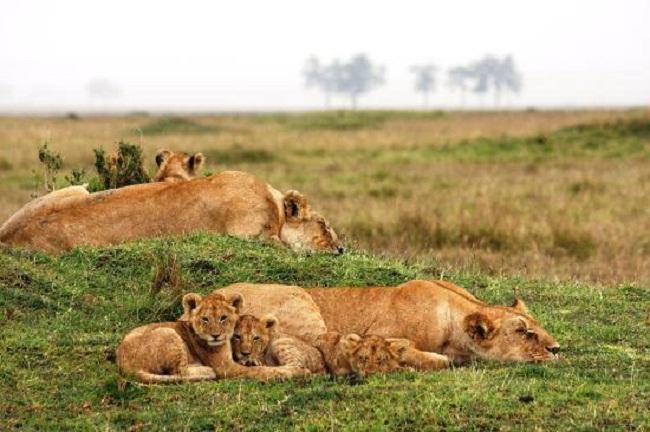 Musiara Swamp Masai Mara Reserve