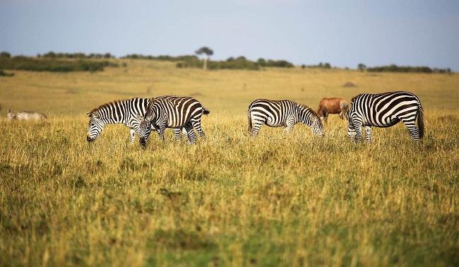 Olare Orok Conservancy Masai Mara Reserve