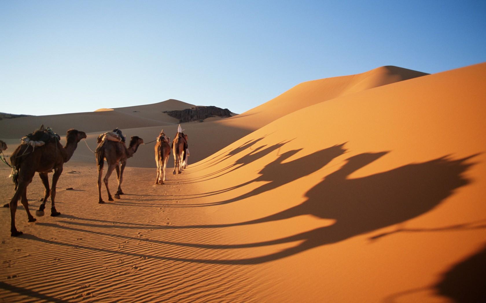 Saharan dunes, Algeria
