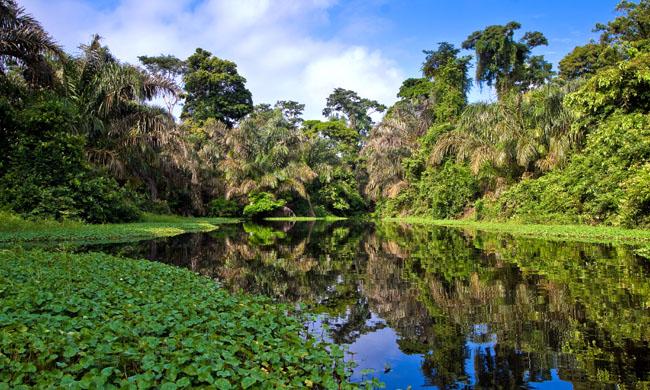 Soberania National Park, Panama