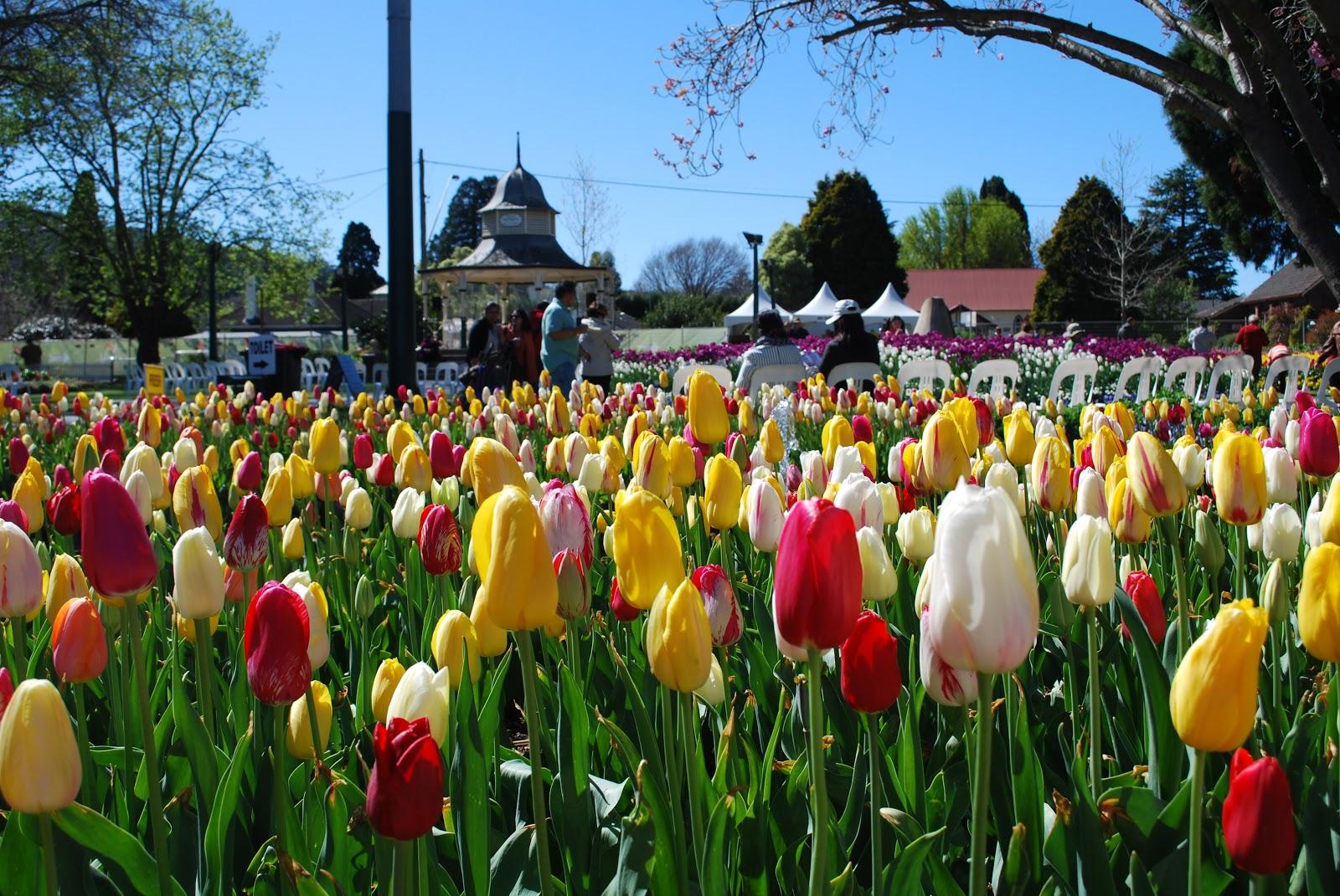 Tulip Festival Bowral