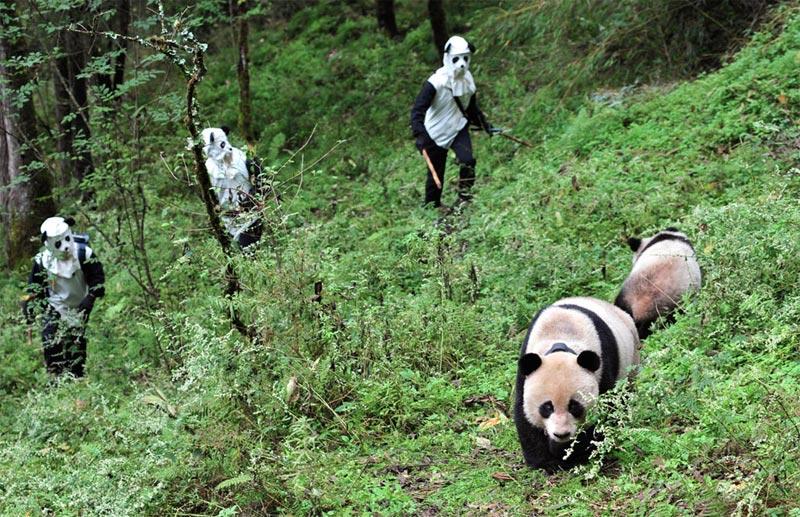 Wolong, China