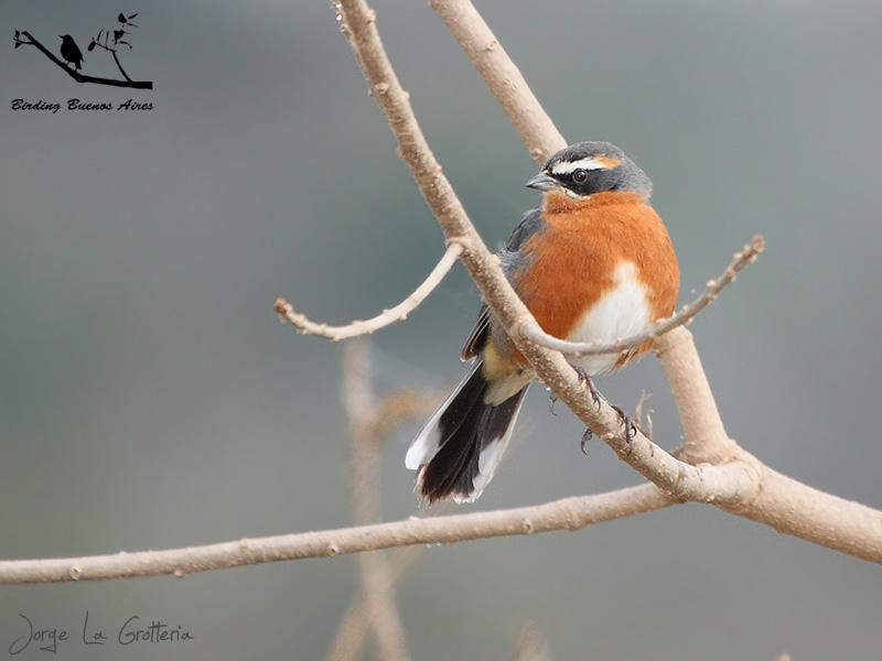 bird watching buenos aires