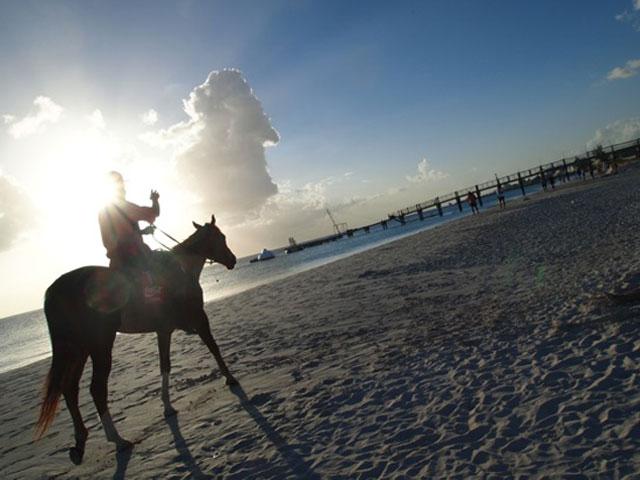 horse back Barbados