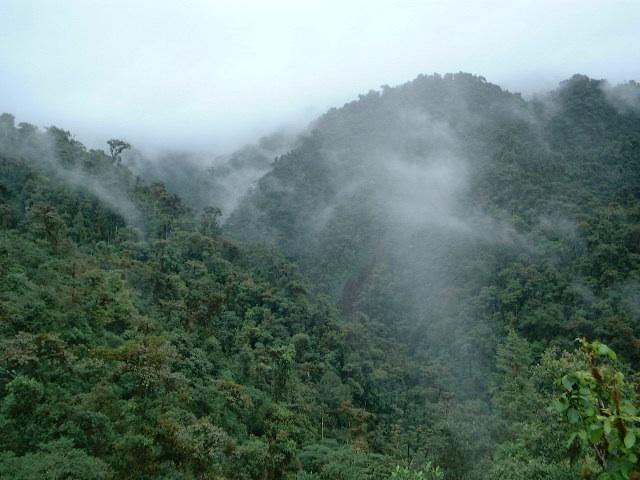 tropical forests, Ecuador